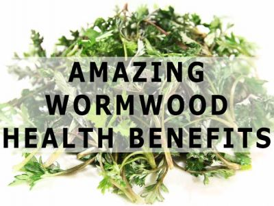 Health Benefits Of Wormwood – A Natural Gift To Human Beings
